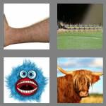 4 pics 1 word 5 letters hairy