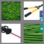 4 pics 1 word 5 letters hedge