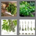 4 pics 1 word 5 letters herbs