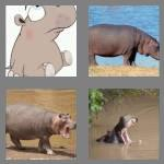 4 pics 1 word 5 letters hippo