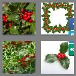 4 pics 1 word 5 letters holly