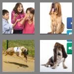 4 pics 1 word 5 letters hound