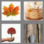 4 pics 1 word 5 letters maple