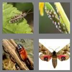 4 pics 1 word 5 letters pests