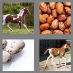 4 pics 1 word 5 letters pinto