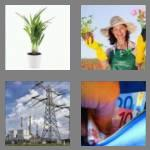 4 pics 1 word 5 letters plant