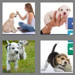 4 pics 1 word 5 letters puppy
