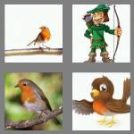 4 pics 1 word 5 letters robin
