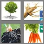 4 pics 1 word 5 letters roots