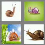 4 pics 1 word 5 letters snail