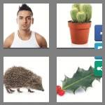 4 pics 1 word 5 letters spiky