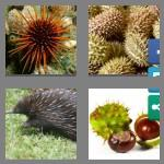 4 pics 1 word 5 letters spiny