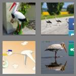4 pics 1 word 5 letters stork