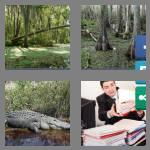 4 pics 1 word 5 letters swamp