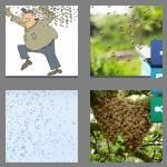 4 pics 1 word 5 letters swarm
