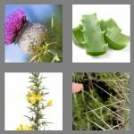4 pics 1 word 5 letters thorn