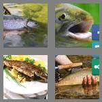 4 pics 1 word 5 letters trout