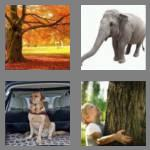 4 pics 1 word 5 letters trunk