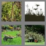 4 pics 1 word 5 letters weeds