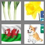 4 pics 1 word 5 letters welsh