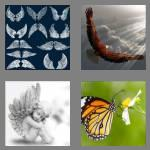 4 pics 1 word 5 letters wings