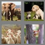 4 pics 1 word 6 letters animal