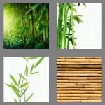 4 pics 1 word 6 letters bamboo