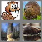 4 pics 1 word 6 letters beaver
