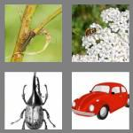 4 pics 1 word 6 letters beetle