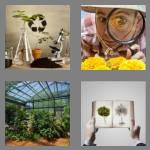 4 pics 1 word 6 letters botany