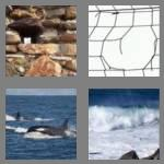 4 pics 1 word 6 letters breach