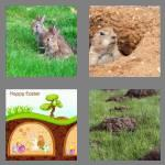 4 pics 1 word 6 letters burrow