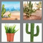 4 pics 1 word 6 letters cactus