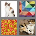 4 pics 1 word 6 letters calico