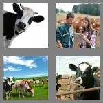 4 pics 1 word 6 letters cattle