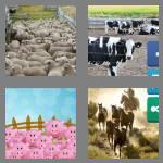 4 pics 1 word 6 letters corral
