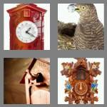 4 pics 1 word 6 letters cuckoo