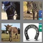 4 pics 1 word 6 letters equine