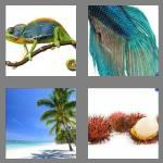 4 pics 1 word 6 letters exotic