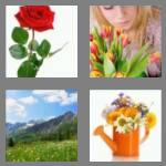 4 pics 1 word 6 letters flower