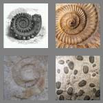 4 pics 1 word 6 letters fossil