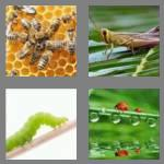 4 pics 1 word 6 letters insect