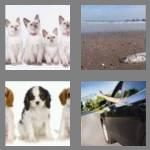 4 pics 1 word 6 letters litter