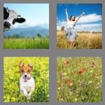 4 pics 1 word 6 letters meadow