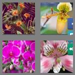 4 pics 1 word 6 letters orchid