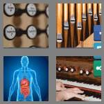 4 pics 1 word 6 letters organs