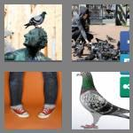 4 pics 1 word 6 letters pigeon