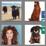 4 pics 1 word 6 letters shaggy