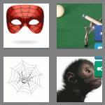 4 pics 1 word 6 letters spider