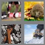 4 pics 1 word 6 letters spikes